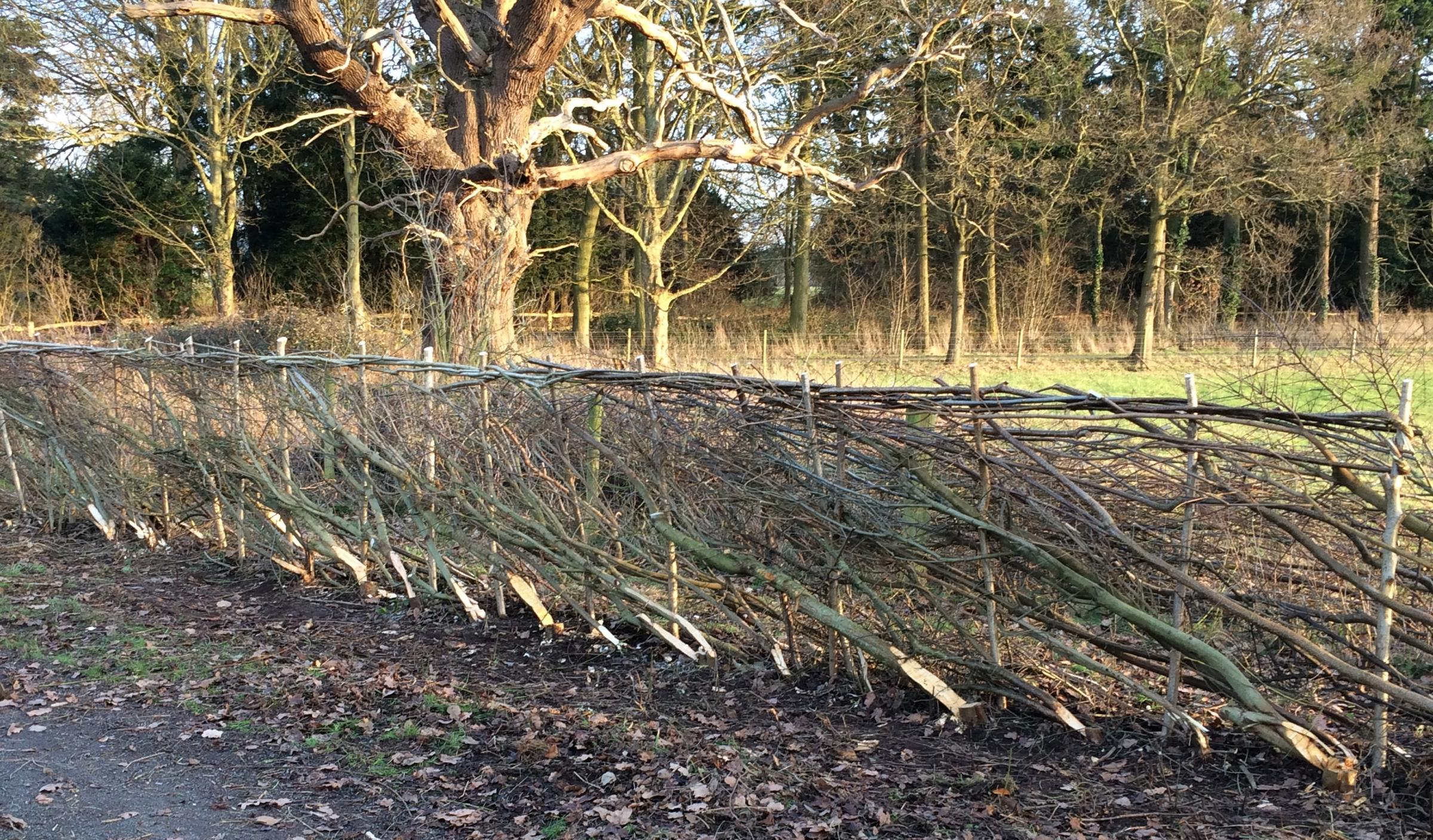 Hedgelaying Course - Saturday 29 February (1 day course)