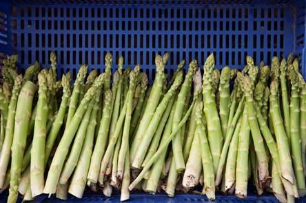 Asparagus picking jobs are available