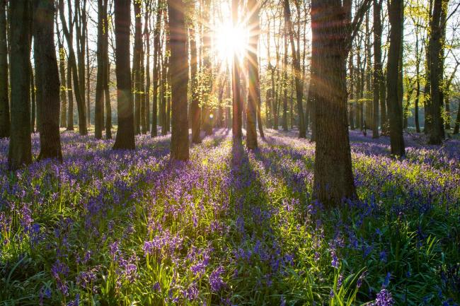 BLUEBELLS: Here is the forecast across the UK for the Spring bank holiday weekend. Picture: Pixabay