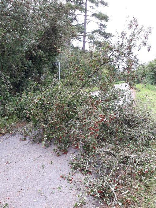 TREES: Storm Francis has caused trees across the county to be blown over