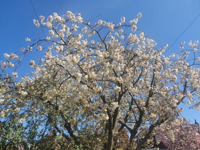 BLOSSOM: Blossom is out across the country