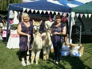 Cotswold Vale Alpacas Cosmo and Ewen won visitors hearts.