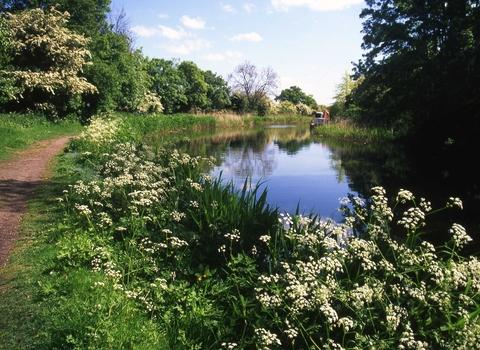See the canal wildlife on nature walk