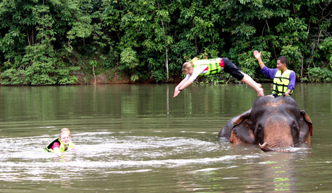 I'll never forget my time with the elephants on Thailand trip