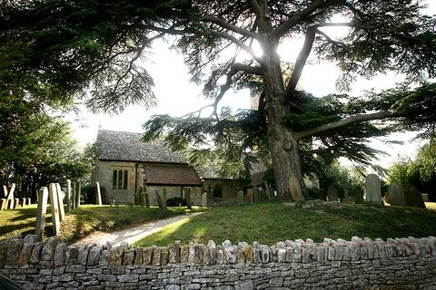 MAJESTIC: The doomed cedar tree in Little Comberton's churchyard. Picture: Kate Barry.