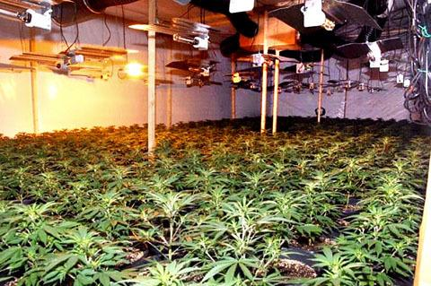 Cannabis factory discovered in Stourport today