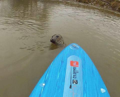 Keith the seal has been spotted again. Picture by Tristan Bawn (sourcetosea2013.blogspot.co.uk)