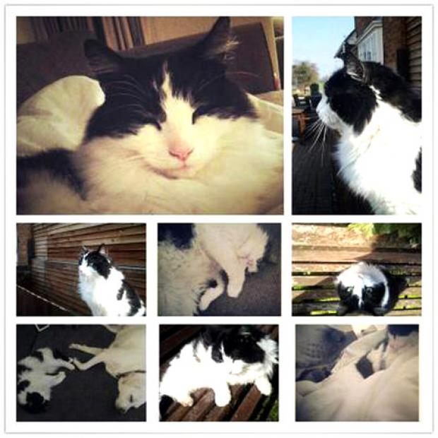 SORELY MISSED: Alfie the cat, who lived at the Childswickham Inn and was a favourite with regulars, was killed by a hit-and-run driver outside the pub.