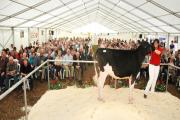 SALE: In the ring at Greville Hall Farm, Hinton-on-the-Green