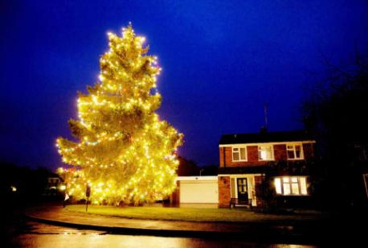 The tree outside the Rowland's house last Christmas