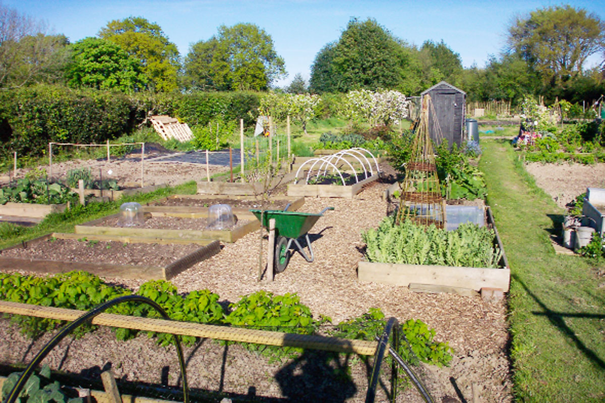 HIDING: Police found a wanted man hiding in a compost heap in allotments
