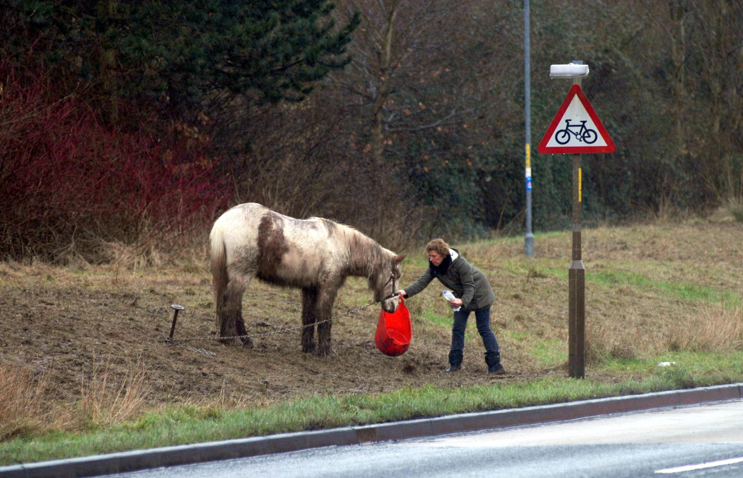 Horses are not abandoned in the mud says traveller who owns them