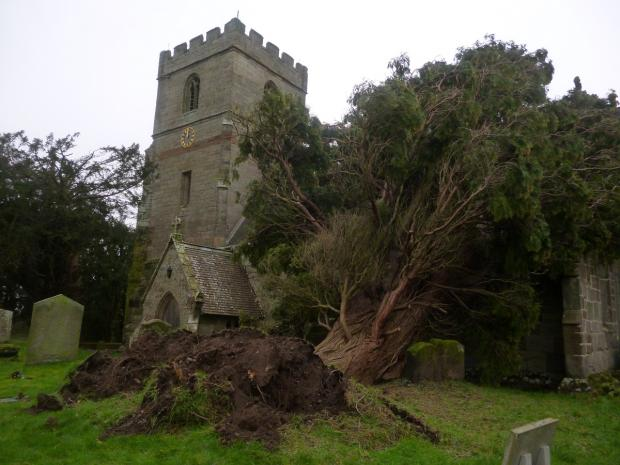 Evesham Journal: FALLEN: Winds brought this mighty tree down on a church. Picture by reader Andrew Kristy. Send your pix to news@worcesternews.co.uk