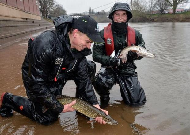 PIKE! Fish rescued from floodwater at Pitchcroft. Picture: Environment Agency
