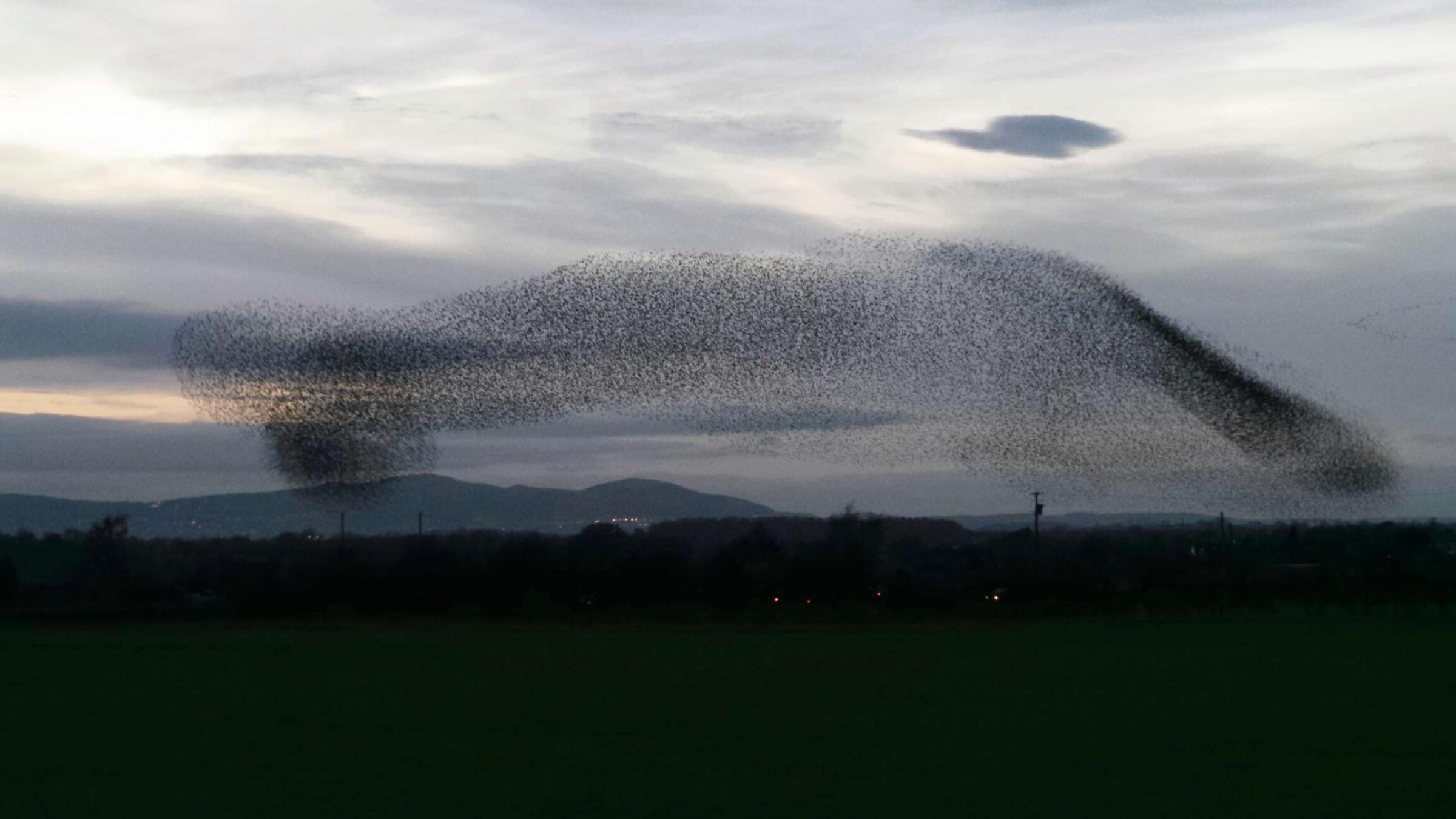 Starling Murmuration over Eckington. Photo by Dave Stephens