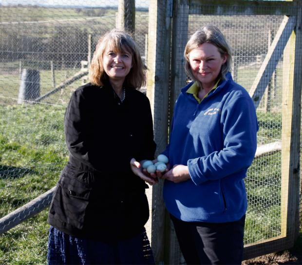 Pictured (l-r) Harriett Baldwin MP and Marie Handy collect rare breed free-range eggs at Ridgeway Bank.