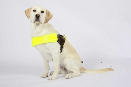Guide Dogs charity needs your help.