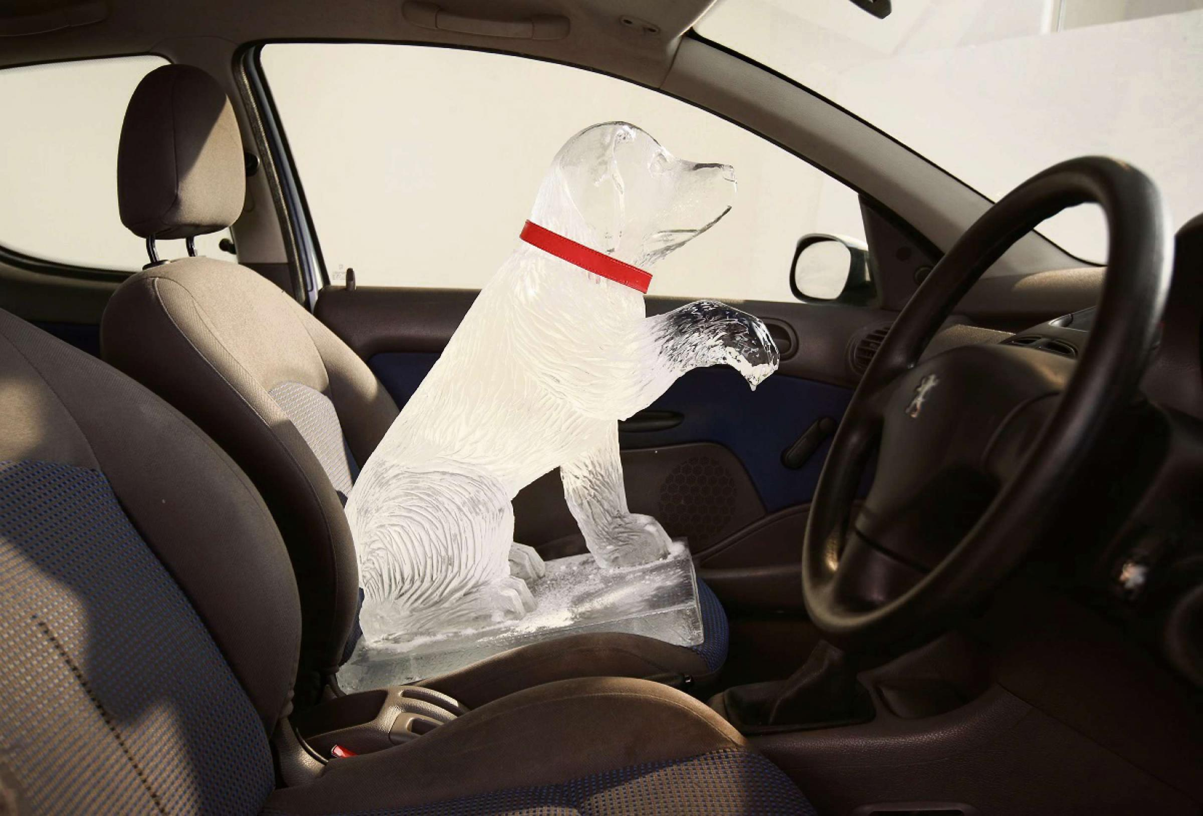 Warning over leaving dogs in hot cars. Picture copyright Dogs Trust.