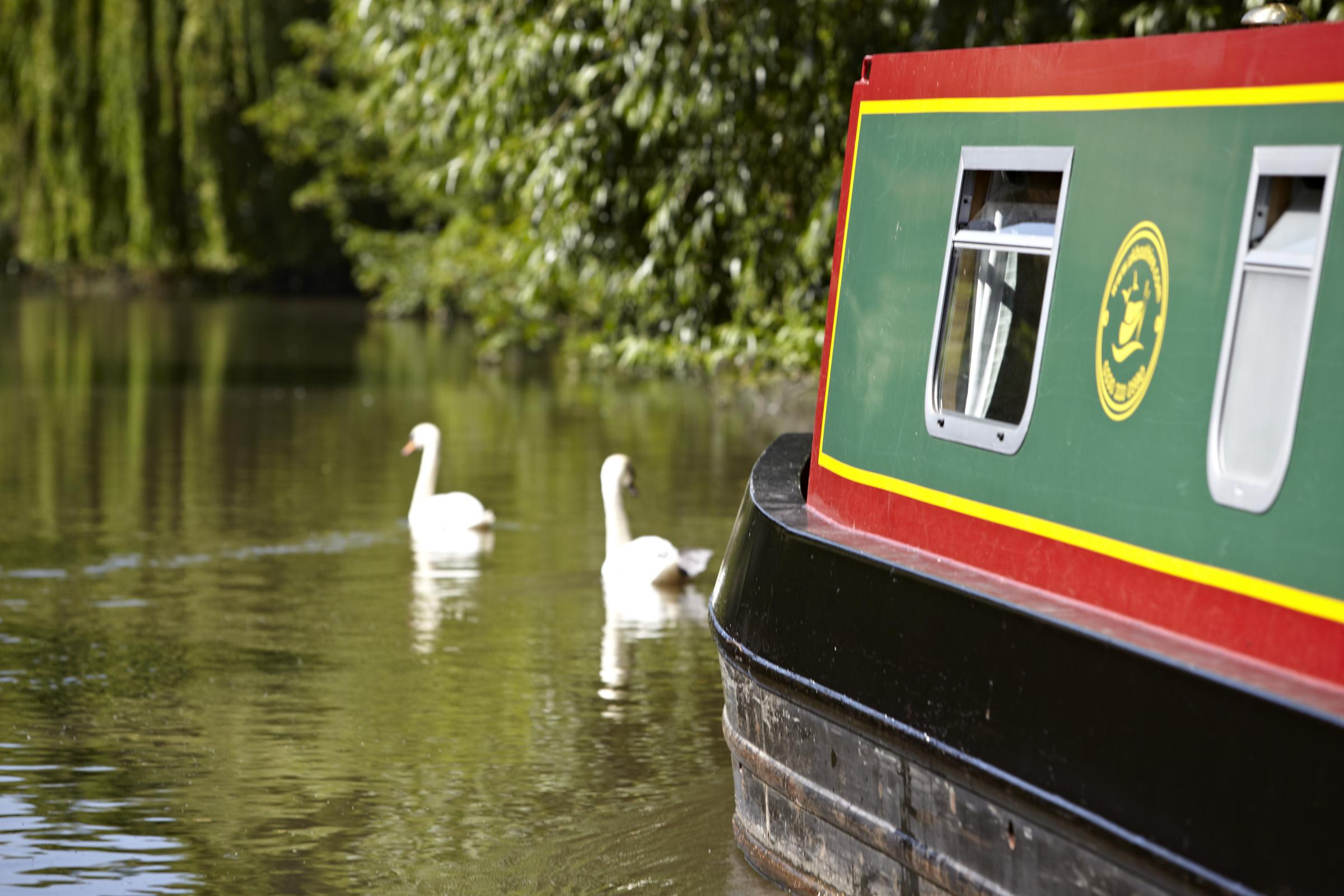 The canal group need photographers to help document the canal's wildlife