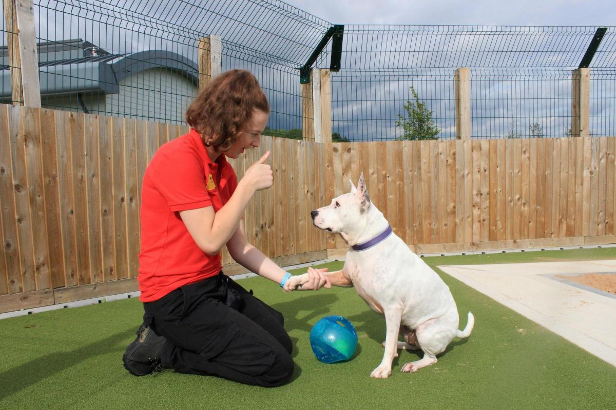 Deaf Crossbreed Looking For A New Home From Dogs Trust Evesham