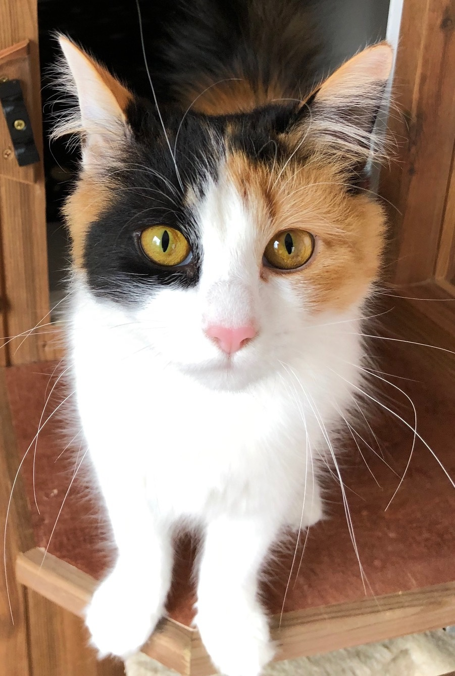 Bella, Worcester and District Cats Protection