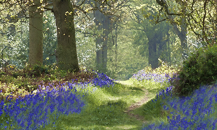 Hilary Roberts - Flowers, Fields & Forests